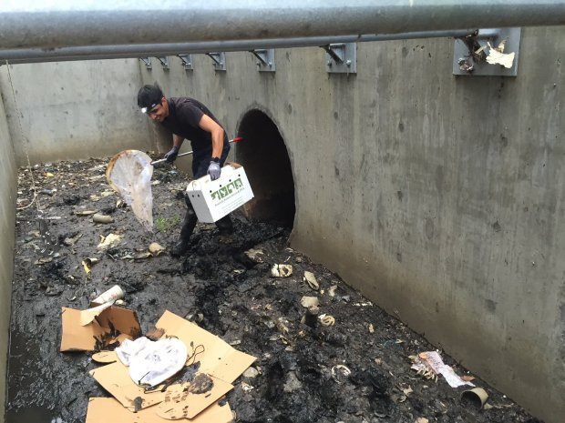 Courtesy the Peninsula Humane Society. A rescuer from a local wildlife center jumped in to help save eight trapped ducklings in San Mateo on Monday.