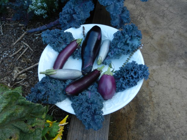 Eggplant comes in many varieties (Photo by Rebecca Jepsen)