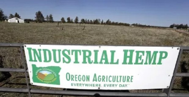 In this April 23, 2018 photo, a sign designates the type of crop grown in a field as it stands ready to plant another hemp crop for Big Top Farms near Sisters, Ore. A glut of legal marijuana has driven pot prices to rock-bottom levels in Oregon, and an increasing number of nervous growers are pivoting to another type of cannabis to make ends meethemp. (AP Photo/Don Ryan)
