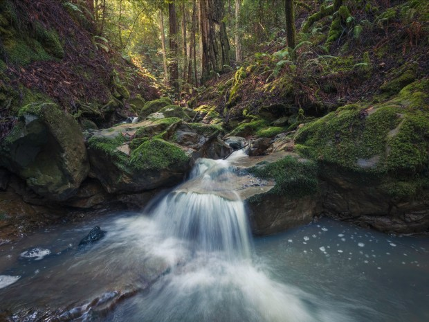 Pristine unnamed creeks run through Harold Richardson Redwoods Reserve in Sonoma County.