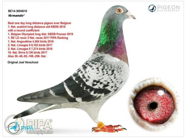 Pigeon named Armando sells for $1.42 million