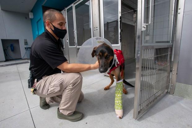 Photos: Santa Clara County opens new Animal Services Center in San Martin 10
