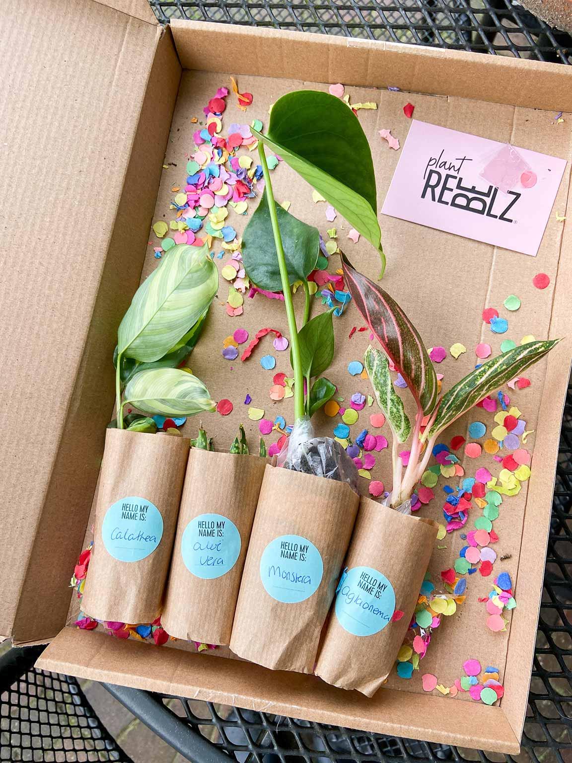 Stekkie Surprise box