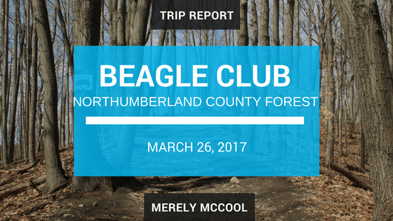 Trip Report: Beagle Club Northumberland County Forest