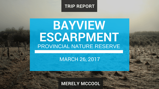 Trip Report: Bayview Escarpment Provincial Nature Reserve