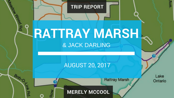 Rattray Marsh and Jack Darling