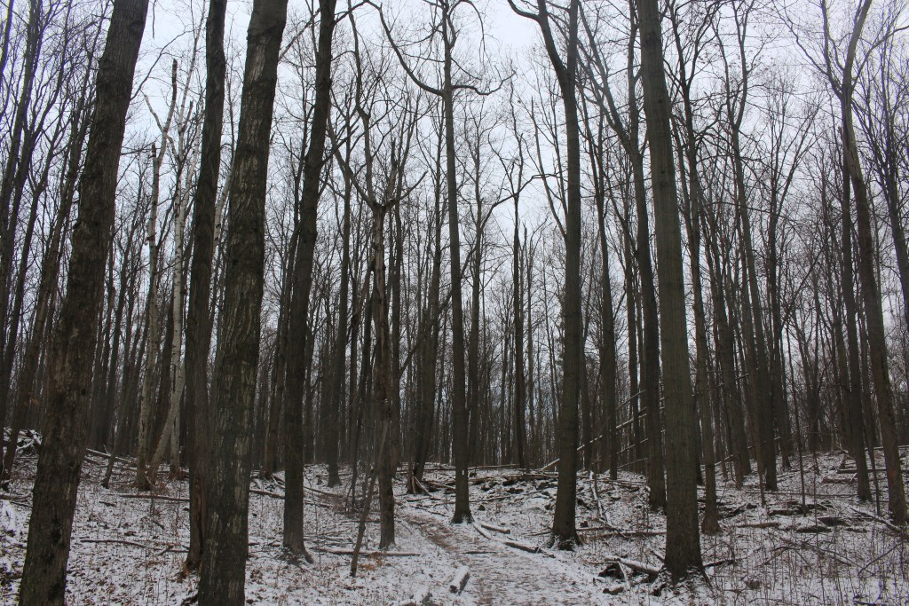 Hiking the Bruce Trail through Mount Nemo Conservation Area - Burlington, Ontario - Merely McCool