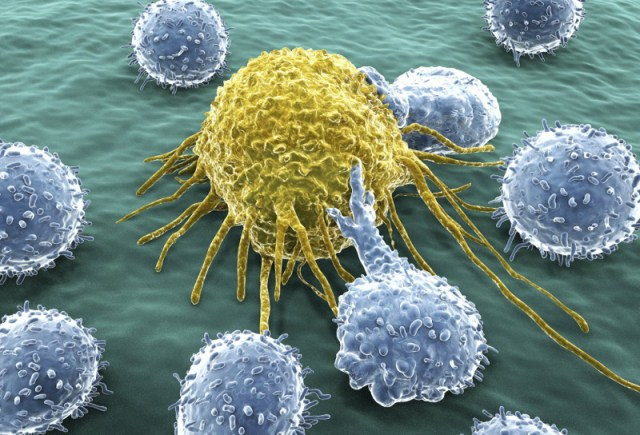 Natural killer cells (blue) attacking an unwanted intruder (yellow)