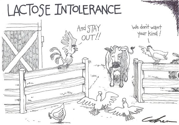 Lactose is one of the constituents of milk that can contribute to intolerances (Cohen cartoons http://bit.ly/2c21A47)