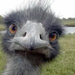 What the Down syndrome Community and Ostriches Have in Common…