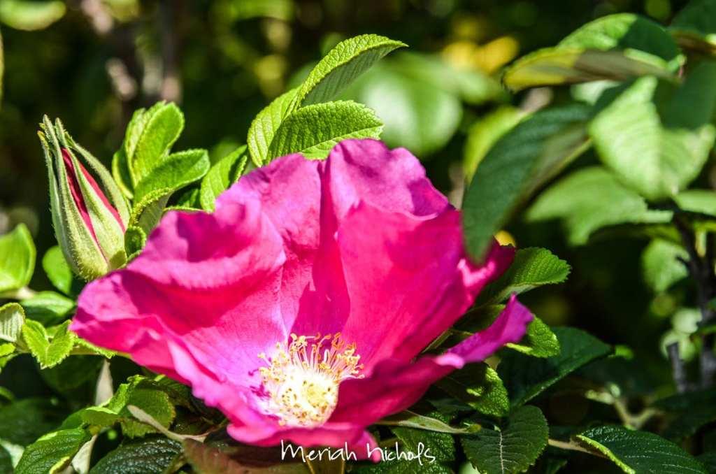 meriah nichols july (4 of 21)