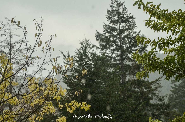 rain (17 of 17)