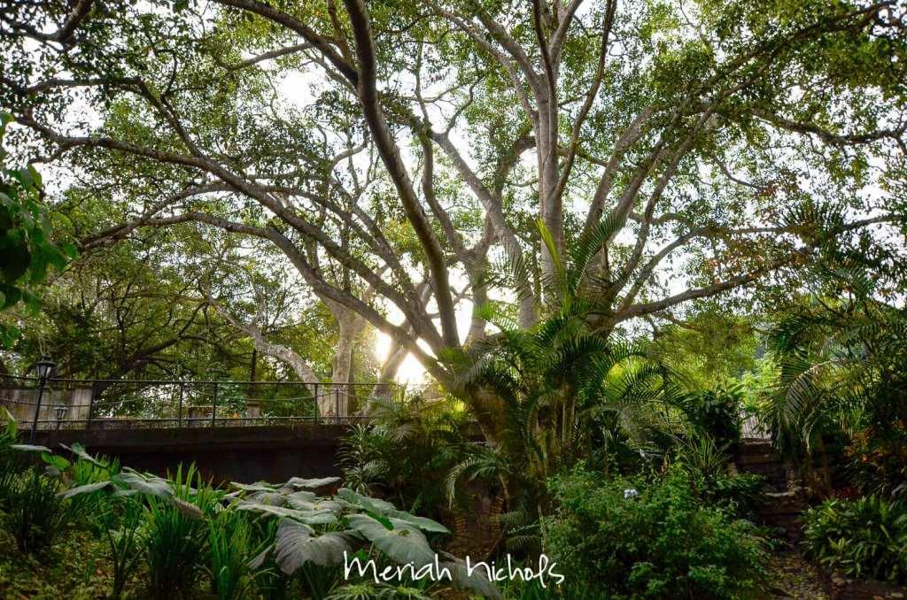 meriah nichols tepic mexico-9