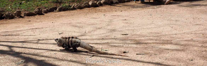 meriah nichols mexico-11