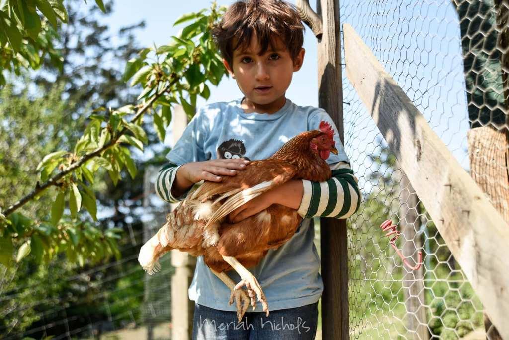 little boy holding a chicken