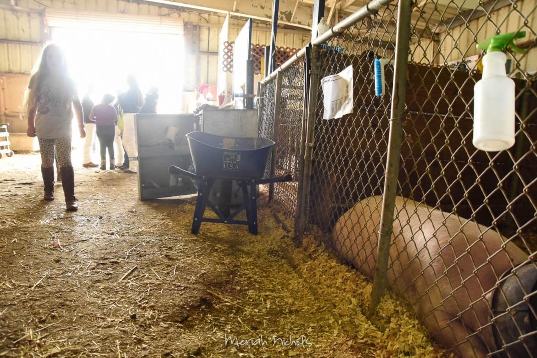 Meriah Nichols Humboldt County Fair-31