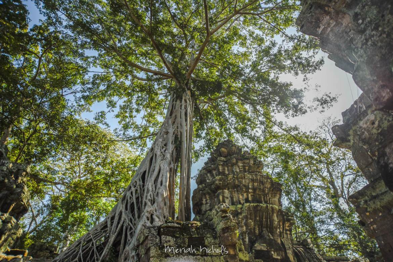 Meriah Nichols Ta Prohm Angkor Wat -20