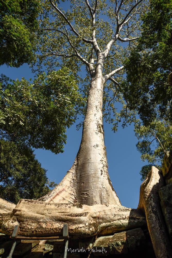 Meriah Nichols Ta Prohm Angkor Wat -21