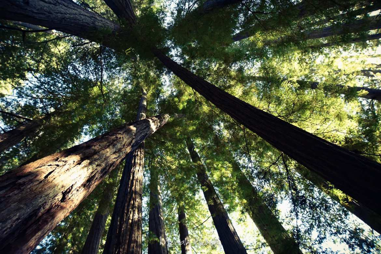 Meriah Nichols Redwoods-49