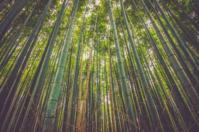 Allarme Deforestazione
