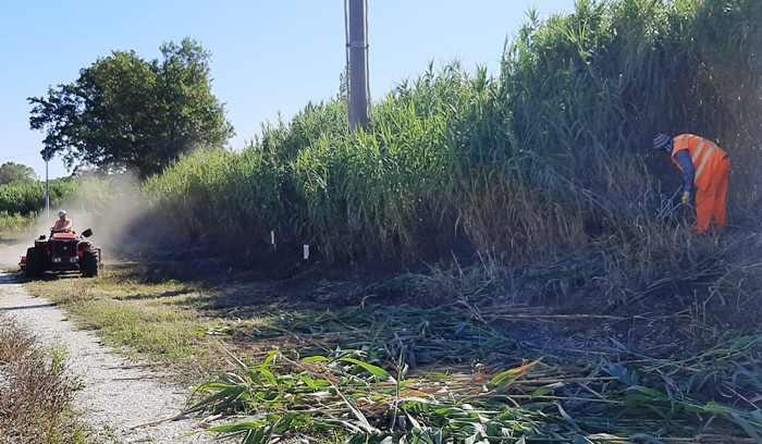 Manutenzione Del Verde Depuratore Morrovalle