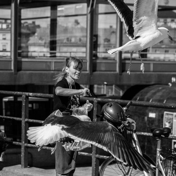 Fågelmatning,-Slussen
