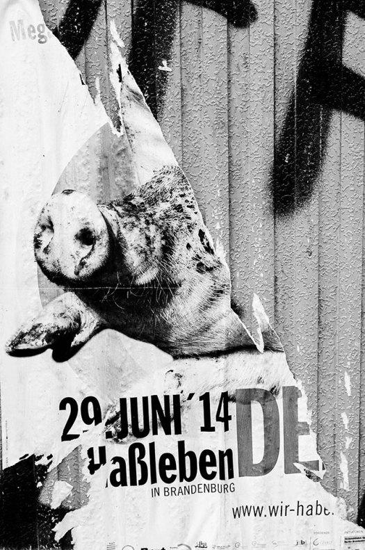 Pigs-losing-space-#2-(1-av-1)
