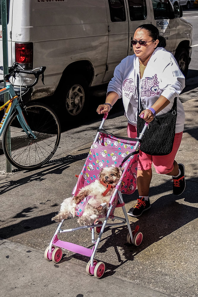 Dogs-de-luxe
