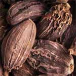 Cardamom-black-बड़ी-इलाइची-Badi-ilaychi-Spices-Names-in-English-Hindi-Meri-Rasoi