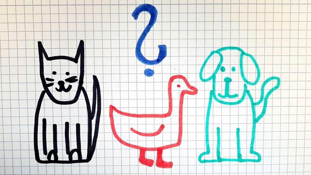 Tierisches Rätsel Wer Knackt Diese Einfache Rechenaufgabe