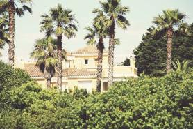 Palmen_in_Andalusien