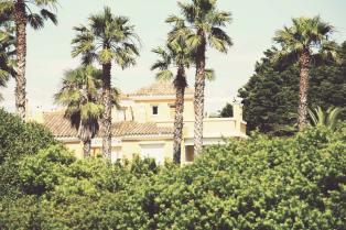 Palmen_in_Andalusien