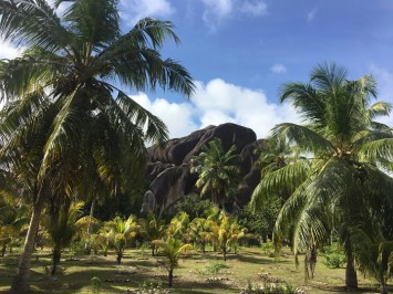 Palmen und Granitfelsen auf den Seychellen