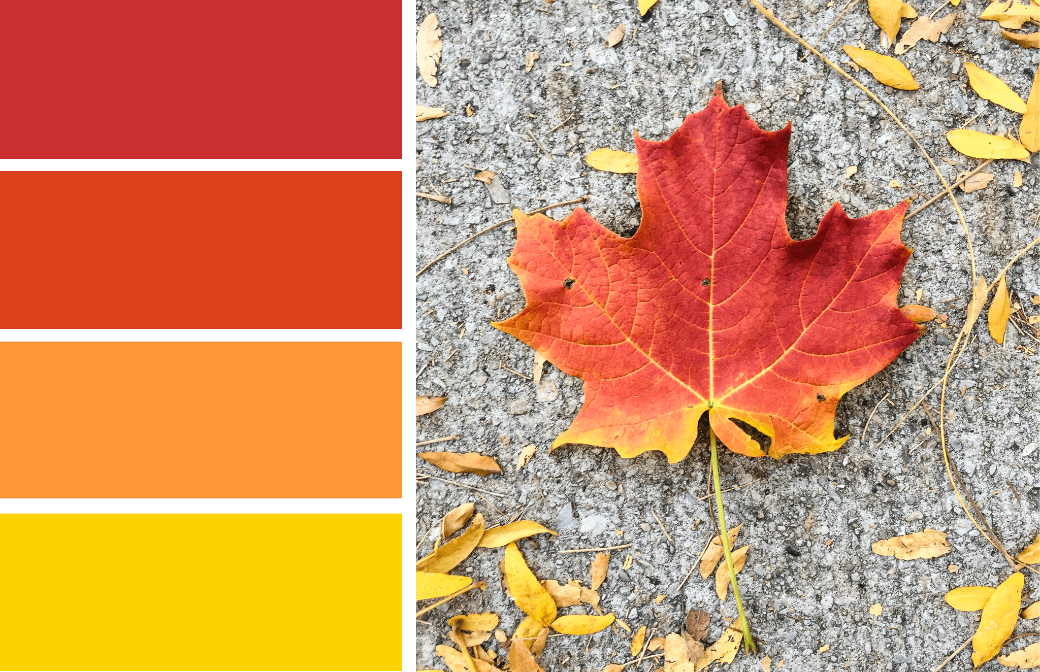 Color Inspiration Fall Leaves