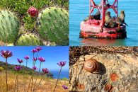 Photo-1-Natural-History-&-Sustainability-720
