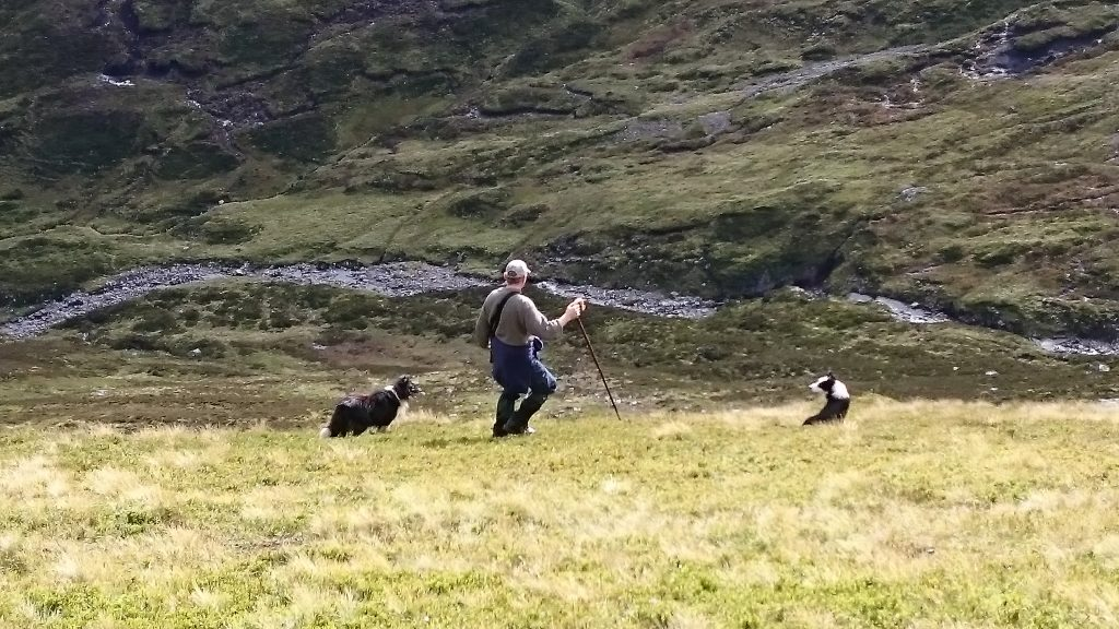 Shepherd with crook and two dogs