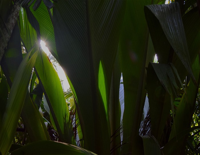 Light behind fronds by Sara Tekula