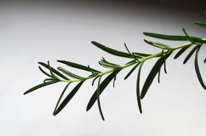 Soin hydratant pour peaux grasses