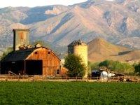 Primul IFN care acordă credite fermierilor eligibili pentru subvenția APIA