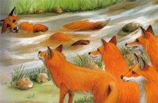 Fabula Saptamanii: Vulpile şi râul meandru