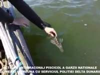 EXCLUSIVITATE: Sibienii de la Garda de Mediu aduc legea în Delta Dunării! | FOTO și VIDEO