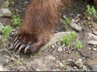 Pui de urs, ucis la Micăsasa