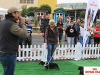 Ce-i lipsea Sibiului: festivalul câinilor!