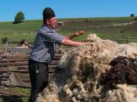 Vești bune pentru oierii din județul Sibiu