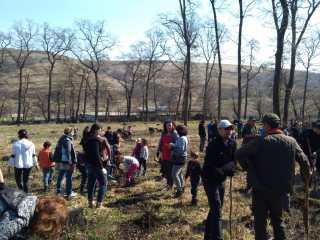 3.500 de puieți de stejar au fost plantați în zona Gușterița