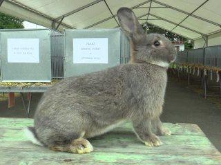 Expoziție anuală depăsări de curte și iepuri
