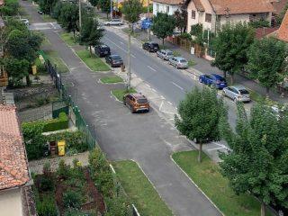 Intervenție pentru salvarea arborilor de pe Calea Dumbrăvii