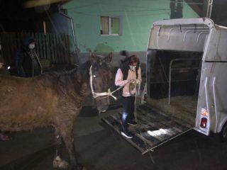 Primul ordin de plasare în adăpost a unui animal abandonat