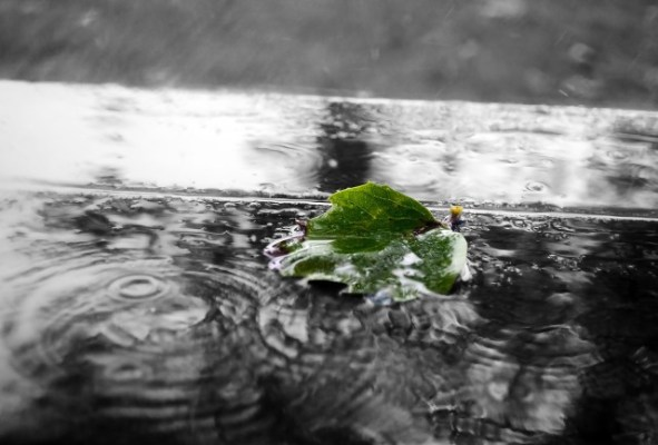 Green Leaf in water