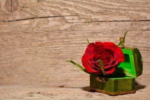 rose-557692_1280